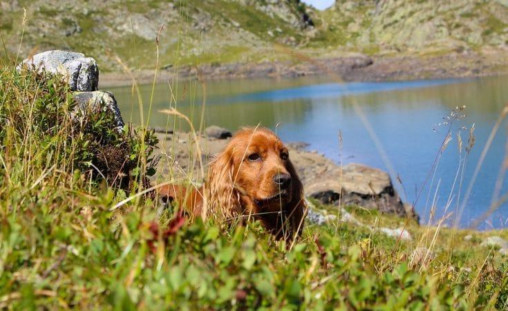 vakantie Frankrijk met hond