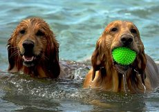 hond op vakantie tips