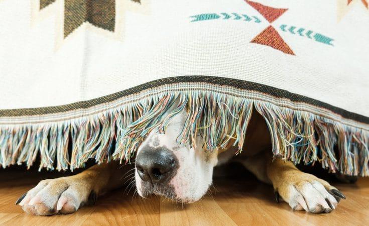 vuurwerkvrije vakantie met hond