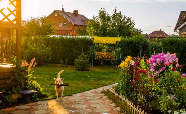 mooie bloemen in tuin van vakantiehuis met omheinde tuin