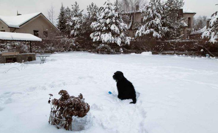 vakantiehuis omheinde tuin in de sneeuw