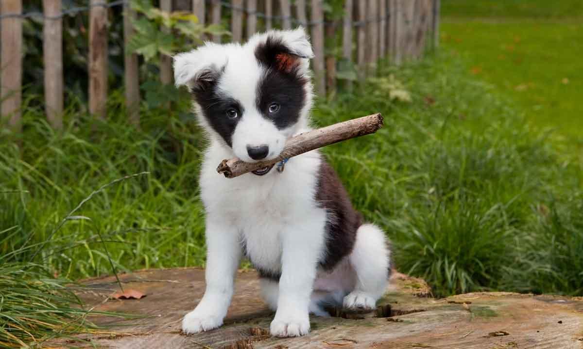 puppy in een omheinde tuin van vakantiehuis