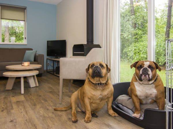 Hondenbungalow Twenhaarsveld 6CD - Nederland - Overijssel - 6 personen