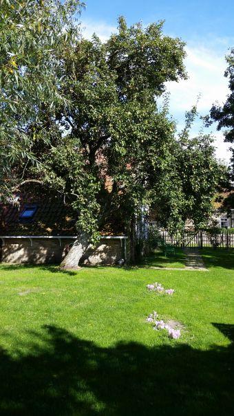 Natuurhuisje in Formerum 28119 - Nederland - Waddeneilanden - 2 personen - omheinde tuin