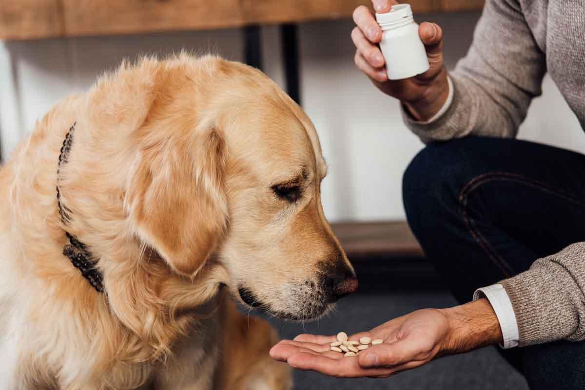 vitaminen aan hond geven